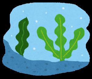 海藻類は免疫力を上げる